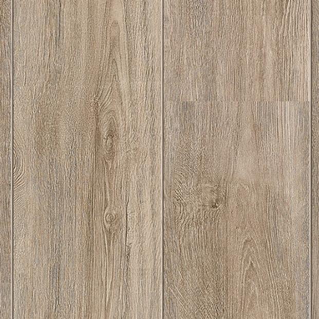 Scale Oak