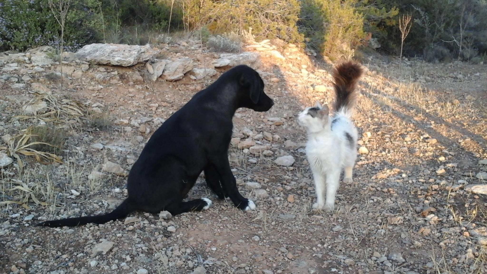 paris and cat