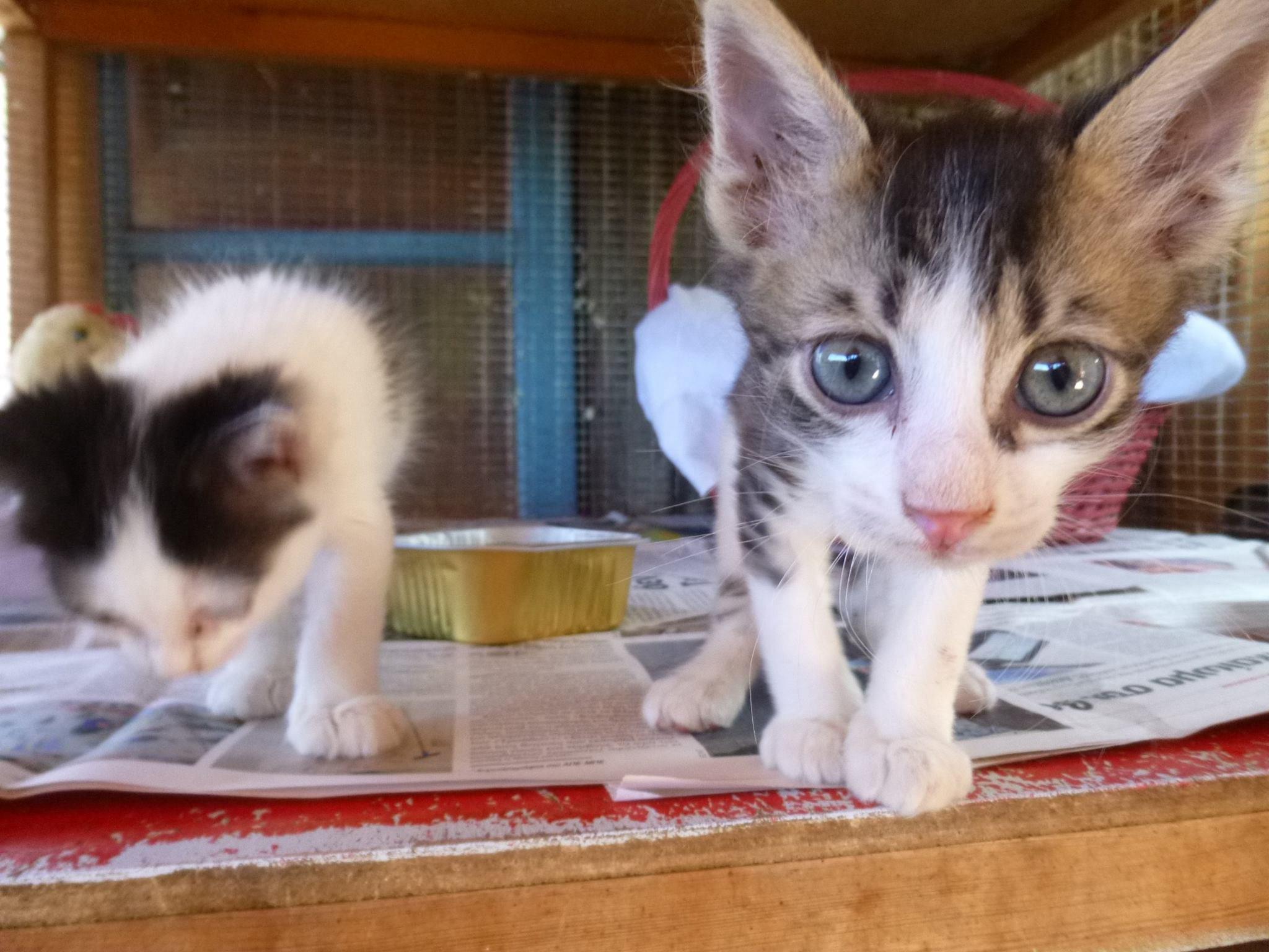 Kitten by Kate