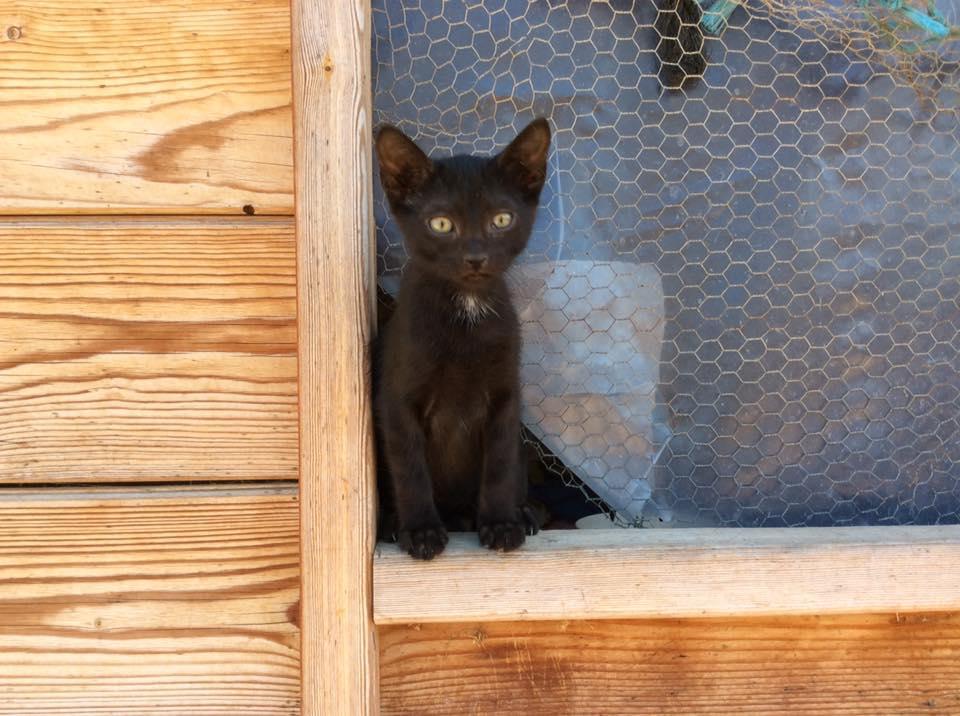 black cat in window