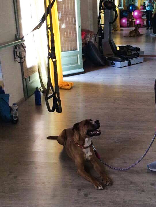 Spike in the gym_edited