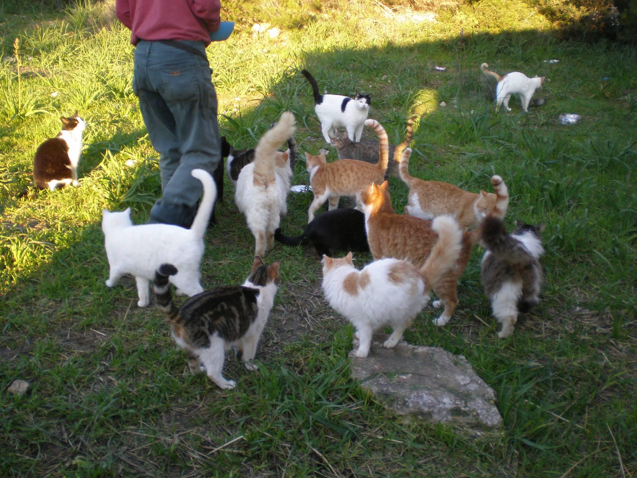 feeding the cats2