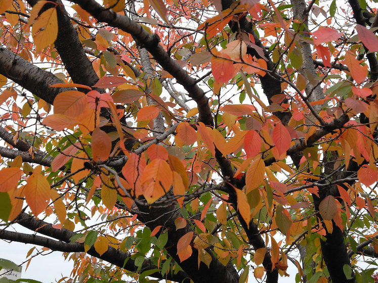 autumn-japan.jpg