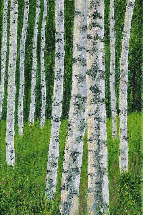 Light on Birches