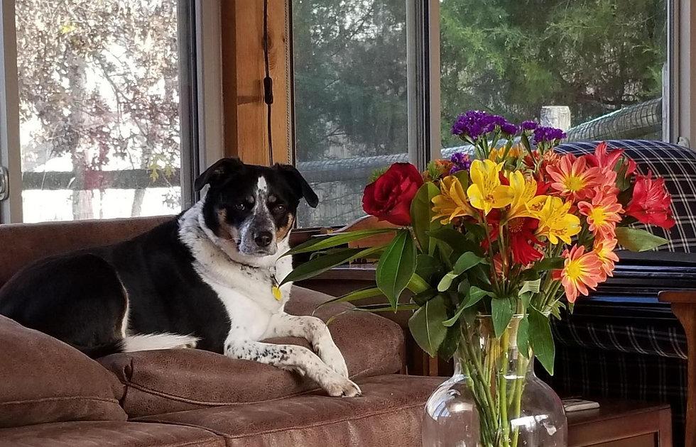 Daisy on couch_edited.jpg