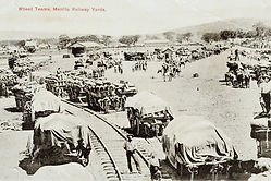 Photo: wheat teams at Manilla Railway 1905