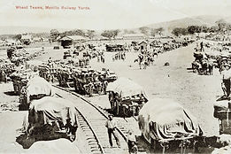 Photo: wheat teams at Manilla Railway 1905