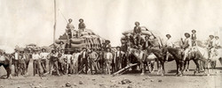 Chaff for Working Horses Manilla 1900s