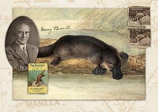 Nichol Platypus/Burrell Postcard