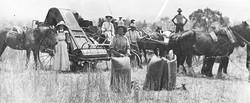 Wheat Harvest c