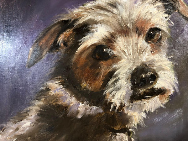 puppy 1.jpg