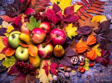 Samhain begins the dark half of the Celtic year but it is also a harvest festival.