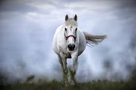 White Horses are noble and dynamic forces to be reckoned with.