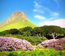 Faeries are said to inhabit the woods at the foot of Ben Bulben in Co. Sligo.