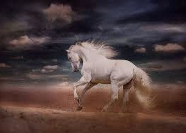 Despite their ability to work well on a team, White Horses have free spirits which cannot be tamed.