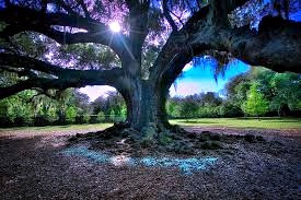 In Celtic culture, the Oak is powerful, sacred, and royal.