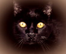The Cu Sith, a malevolent faerie appearing as a monstrously large black cat,was on the prowl on Samhain