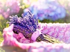 Lavender dreams to you!