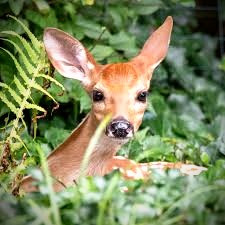 What can an encounter with a fawn tell you about the changes you need to make in your life?