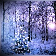At the Winter Solstice, the Celts put lights and shiny objects in pine trees to encourage the return of the sun.