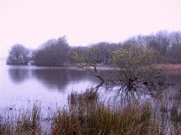 Lough Beg, Ireland, the setting for Seamus Heaney's poem about his murdered cousin.