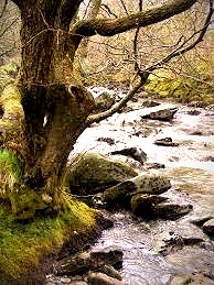 Those born under the Celtic Tree Sign of the Alder are passionate trailblazers.