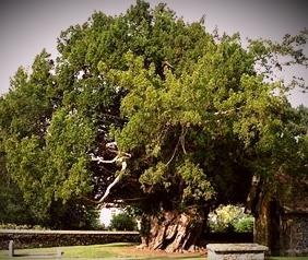 Celtic Tree Symbolism