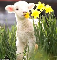 """Imbolc means """"in the belly."""" Nature is pregnant with new life. For example, it is the beginning of the lambing season."""