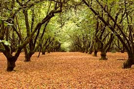 A place where a hazel, apple, and hawthorn tree are found growing near one another marks an area where magical things happen.