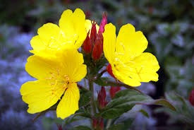 Scatter some yellow flowers, like primroses, around your house to protect it, your family, and yourself from faerie mischief on Beltane.