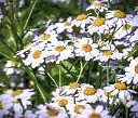 Chamomile is not just for relaxing!  The Celts used it for love potions and for increasing the effectiveness of other magic.