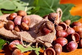 A hazelnut can provide insight into your future love life.