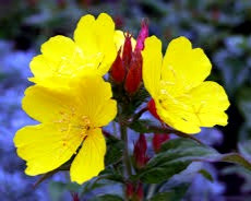 On Beltane, scatter yellow flowers, such as primroses, around the outside of your house to protect all inside from faerie mischief.
