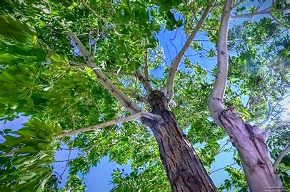 Ash trees grow to such great heights, Celtic folklore said they connected the earth and sky as well as this world and the Otherworld.