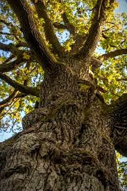 The Oak King battles the Holly King twice a year.  When he wins, he brings light and warmth to earth.