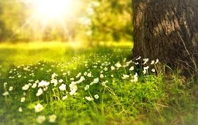 Imbolc celebrates the return of the sun, new life and new beginnings.