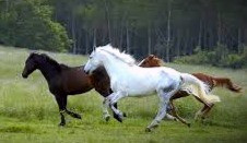 In Celtic symbolism, horses are a sign of victory and transcendence.