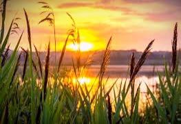 On the Celtic calendar, Beltane marks the start of the light half of the year.