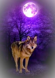 The Reed / Wolf makes a valuable companion and guide through the journey of life.