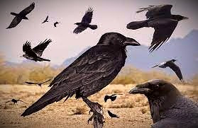 Ravens symbolized death but they were believed also to be able to shuttle messages between the living and the dead.
