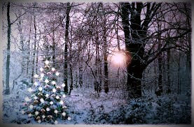 At Winter Solstice, the Druids decorated Scots Pines with lights and shiny objects to coax the sun to return.