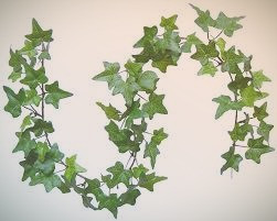 Celtic Tree Signs: Ivy and the Butterfly