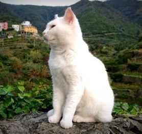 Cliodna turned her sister, Aeibhill, into a white cat to eliminate her as a romantic rival.