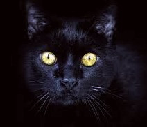 The Cat Sith is a Scottish faerie that appears as a black cat which steals souls.