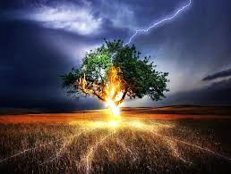 Oaks are majestic trees but avoid them during storms. They attract lightning!