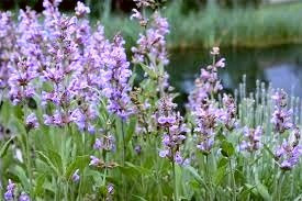 Medicinal herbs picked on Beltane are said to be particularly effective.