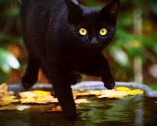 On Samhain's Eve, beware the soul-stealing Cat Sith!