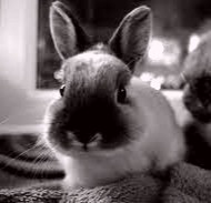 Is it a cute little bunny or a mischievous Puca?