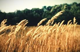 To the Celts, the summer solstice marked midsummer, a time for a second planting to ensure an abundant fall harvest.