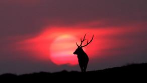 天道酬勤 半島尋鹿——我所認識的攝影者吳嘉錕